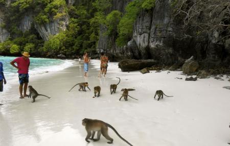 Monkey Beach Image