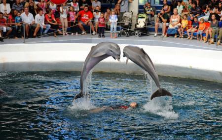 Dolphinarium Image