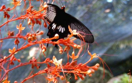 Panee Butterfly Farm Image