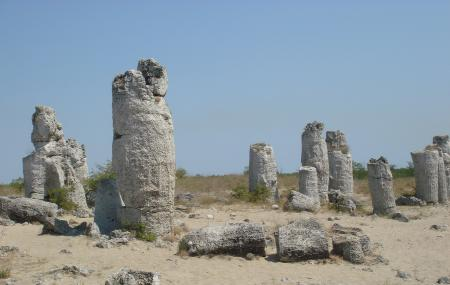 Stone Forest Image