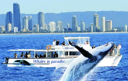 Whales In Paradise Image