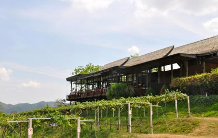 Hua Hin Hills Vineyard Image