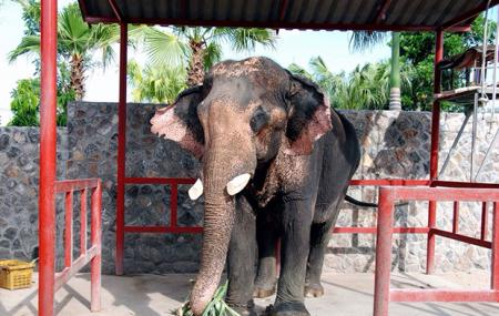 Hutsadin Elephant Foundation Image