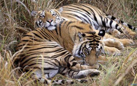 Indira Gandhi Wildlife Sanctuary And National Park Image