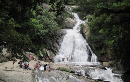 Monkey Falls Image