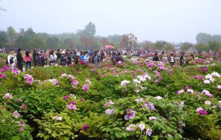 Luoyang International Peony Garden Image