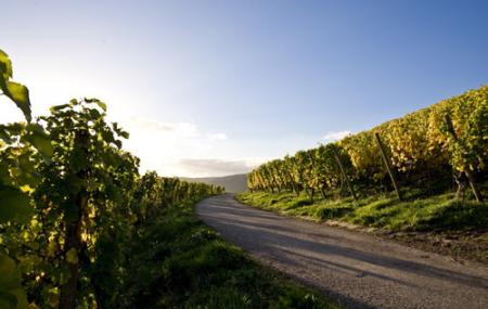 Trier Wine Culture Trail Image