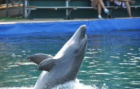 Marmaris Dolphinarium-aquapark Image