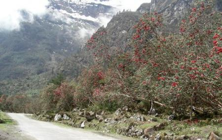 Shingba Rhododendron Sanctuary, Lachung