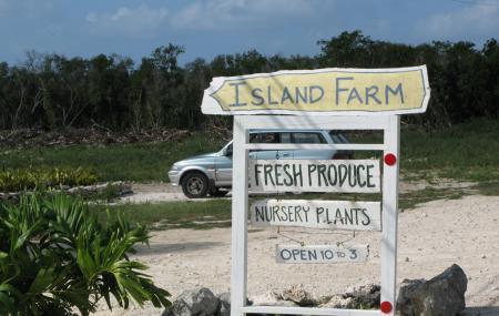 Island Farm Image