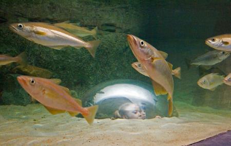 Tregastel Marine Aquarium Image
