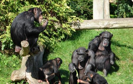 Chester Zoo Image