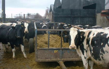 Streamvale Open Dairy Farm Image
