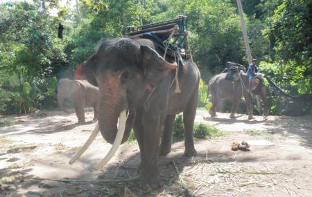 Mahawangchang Elephant Camp Image