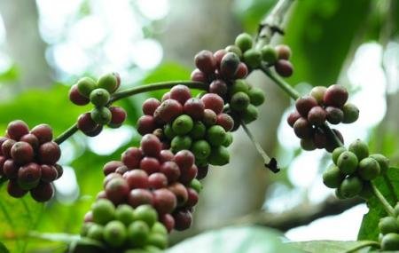 Deepa World Spice And Ayurvedic Garden Image