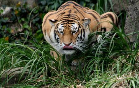 Periyar Tiger Reserve Image