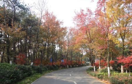 Hunan Forest Botanical Garden Image