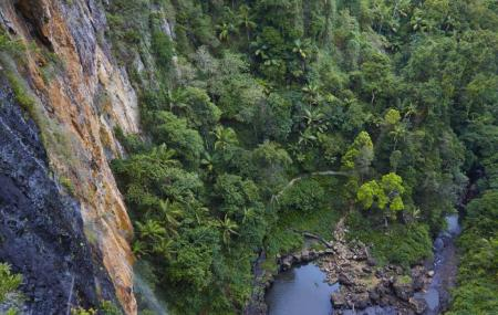 Springbrook National Park Image