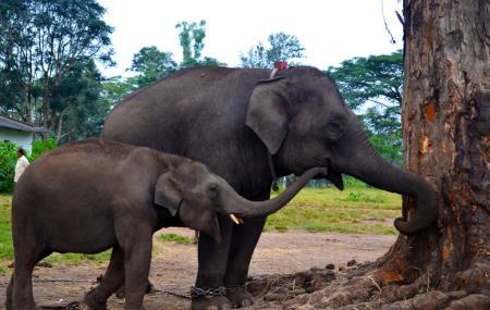 Dubare Elephant Camp Image