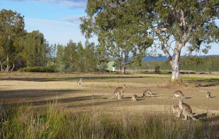 Coombabah Lakelands Conservation Area- Eastern Section Image