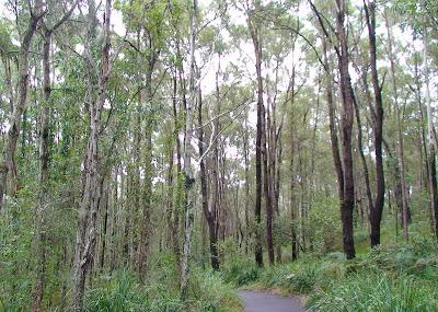 Coombabah Lakelands Conservation Area- Western Section Image