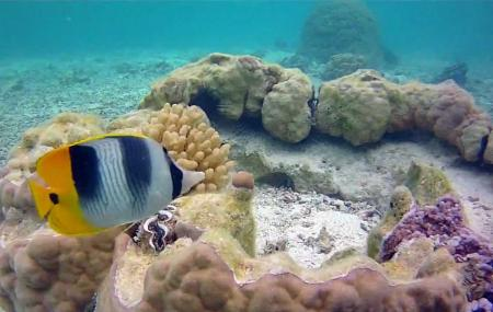 Pure Snorkelling By Reef Discovery Image