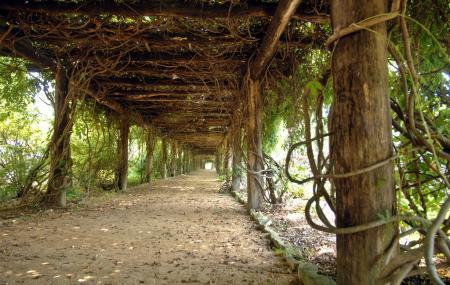 Coker Arboretum Image
