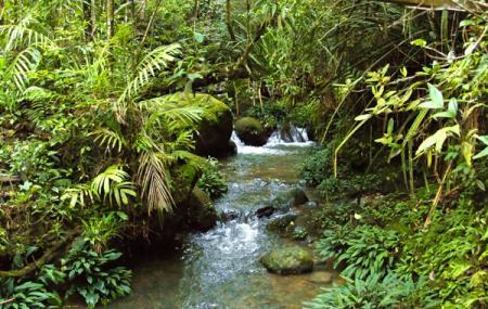 Kinabalu Park Image