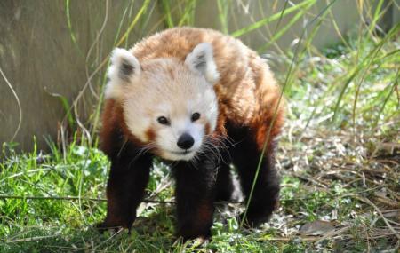 Chattanooga Zoo Image