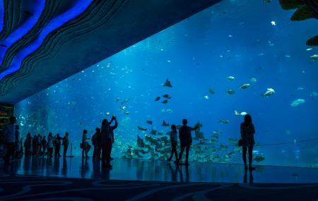 Chimelong Ocean Kingdom Image