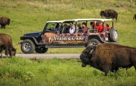 Buffalo Safari Jeep Tour Image