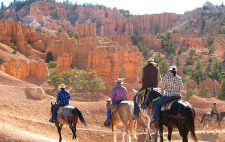Panderosa Trail Rides Image