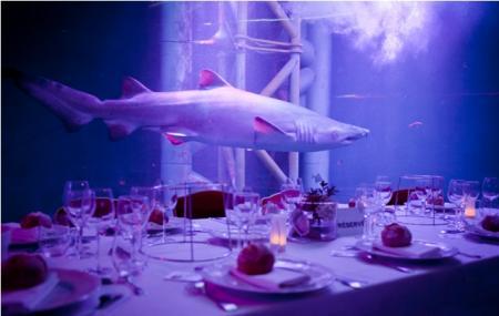 Grand Aquarium Image