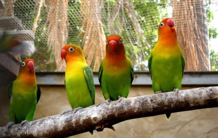 Rainbow Jungle Image