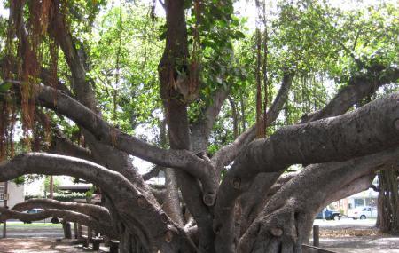 Banyan Tree Park Image