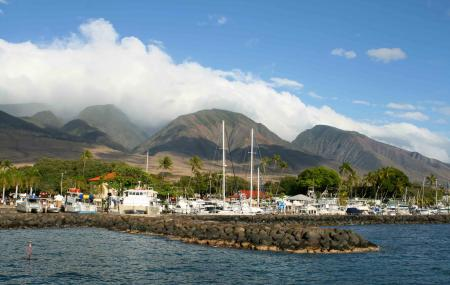 Lahaina Harbour Image