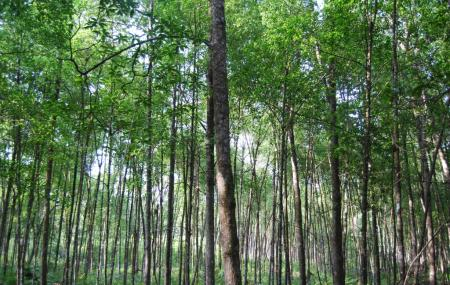 Matang Mangrove Forest Reserve Image