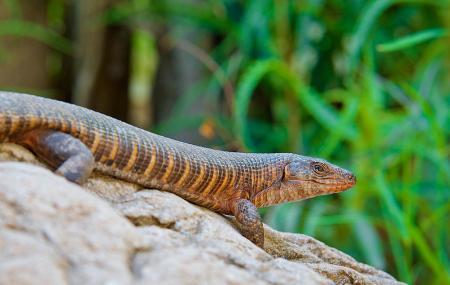 Kinyonga Reptile Centre Image