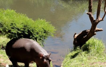 Hippo Jessica Image