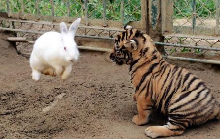 Qingdao Animal World Image