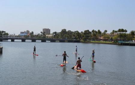 Three Brothers Boards Dolphin Manatee Paddle Board Tours Image