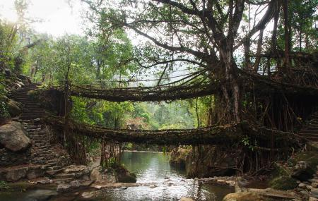 Double Decker Living Root Bridge Image