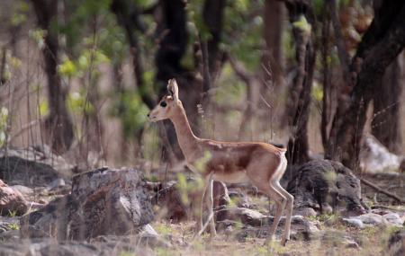 Gajner Wildlife Sanctuary Image