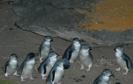 Penneshaw Penguin Centre Image