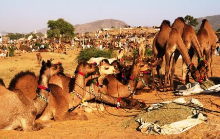 Pushkar Camel Fair Image