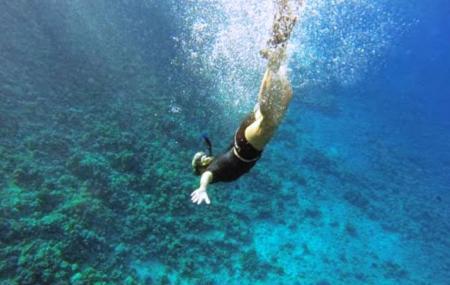 Maui Snorkel Charters Image