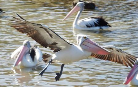 Flinders Chase National Park Image