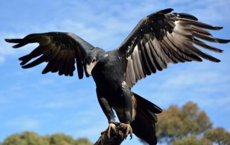 Raptor Domain Image