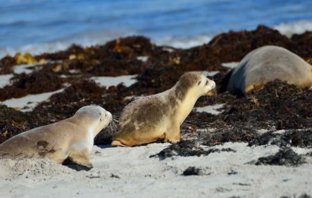 Seal Bay Conservation Park Image