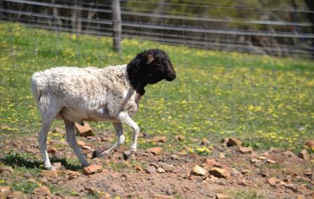 Will's Rare Breeds Farm Image